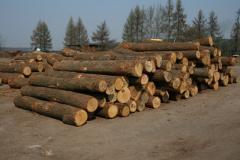 Surowce drzewne
