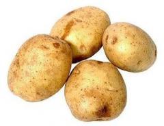Ziemniaki certyfikat FITO