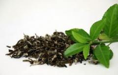 Herbatki odchudzające w wielu różnych smakach