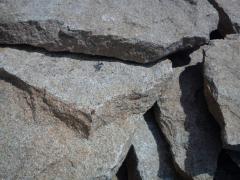 Granit płytowy