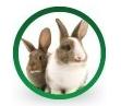 Pasze dla królików.
