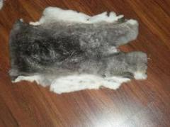 Skin of rabbit