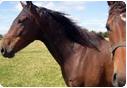 Pasze dla koni