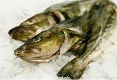 Ryby - sprzedaż hurtowa i detaliczna