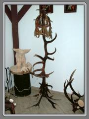 Antler production