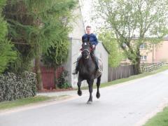 Konie wszelkiej maści rasowe