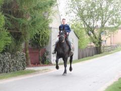 Sprzedaż koni rasowych
