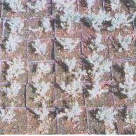 Substraty do ukorzeniania roślin iglastych