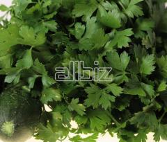 Parsley leaf
