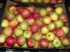 Jabłka jonagored.