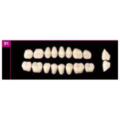 Zęby boczne dolne