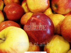 Jabłka słodkie deserowe z chłodni.