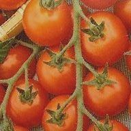 Pomidory o rozmiarach 2b i 3b