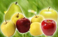 Świeże jabłka i gruszki.