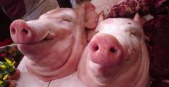 Half-corps pork