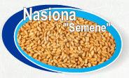 Wiele rodzajów nasion