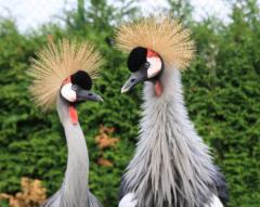 Birds other decorative