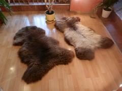 Skóry owcze Kolory naturalne 110-120cm