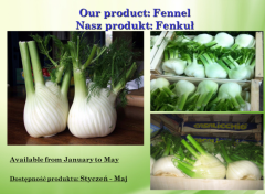 Whole fennel