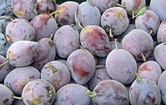 Śliwki świeże owoce z przeznaczeniem na eksport