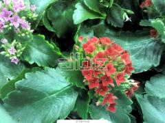 Seedlings of decorative plants