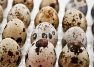 Wild birds eggs