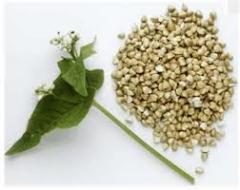Nasiona gryki