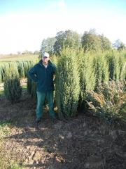 Jałowiec chiński, Juniperus communis