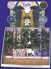 Seedlings of flowers