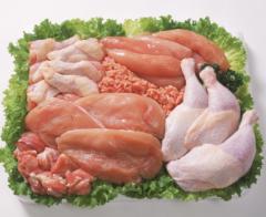 Meat of bird