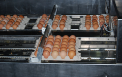 Home poultry eggs