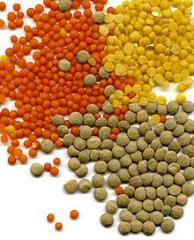 Lentils crop