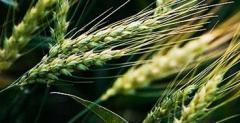 Fertilizers for farming