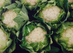 Fresh cauliflowers packed in cardboard boxes.