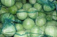 Fresh white cabbage, packed into the net.