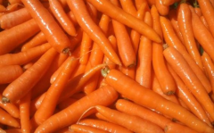 New carrots sweet, bulk, wholesale.
