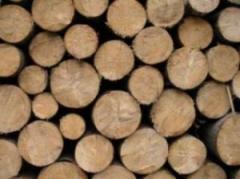 Drewno budowlane (dąb)