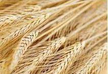Środki ochrony roślin rolniczych
