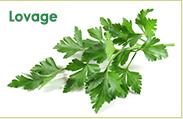 Świeże zioła