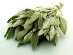 Clary (Salvia) leaves