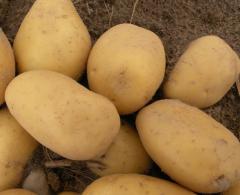 Ziemniaki Stasia