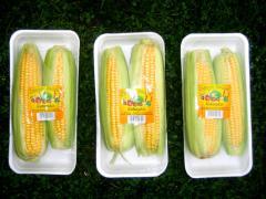 Kukurydza żywnościowa świeża