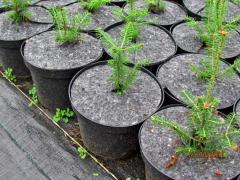 Plant protection products against weeds