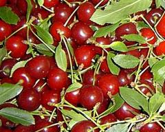 Wiśnie owoce świeże z przeznaczeniem na eksport