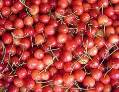 Czereśnie słodkie i soczyste świeże owoce z