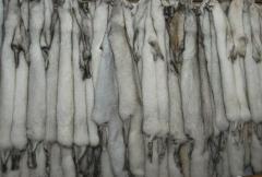 Silver fox hide