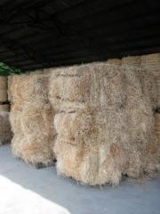 Wełna drzewna, wood wool, wiolina, wolina (sucha,