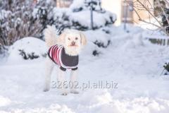 Sweterki dla psów, seria Glasgow
