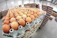 Jaja kurze świeże z Sokołowa