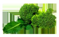 Świeże brokuły.